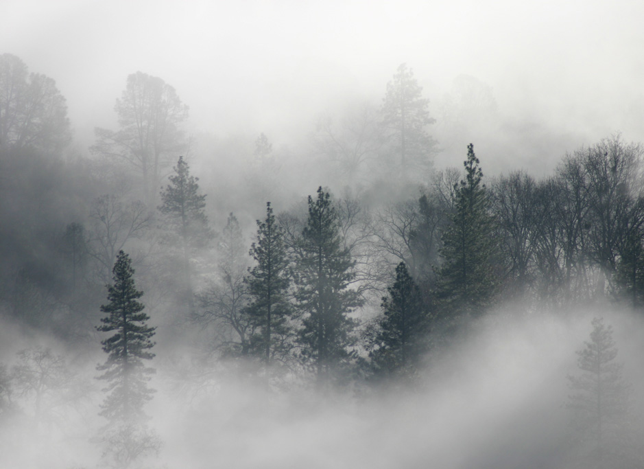 landscapes trees fog - photo #36